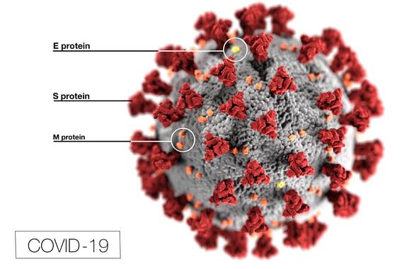 COVID-19 illustration by CDC / Alissa Eckert, MS; Dan Higgins, MAMS